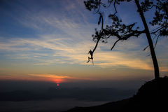 Schattenbildbaum mit Sonnenuntergang Stockfotos