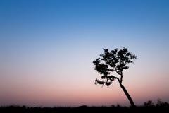 Schattenbildbaum mit Sonnenunterganghimmel Lizenzfreies Stockbild