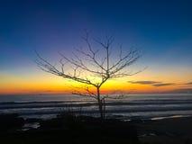 Schattenbildbaum- und -strandsonnenuntergang Lizenzfreies Stockbild