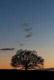 Schattenbildbaumsonnenuntergang Stockfotografie