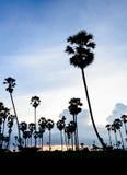 Schattenbildbild der Arengapalme bei Sonnenuntergang Stockfotografie