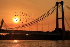 Schattenbildbild von den Vögeln, die nahe Brücke fliegen Stockfoto