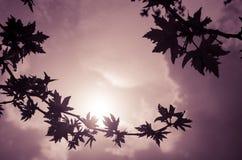 Schattenbilder Lizenzfreies Stockbild
