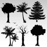 Schattenbilder der Bäume Lizenzfreie Stockfotos