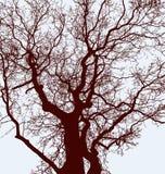 Schattenbilder der Baumstämme mit Niederlassungen Lizenzfreie Stockfotografie