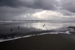 Schattenbilder der Möven auf Strand Stockfoto
