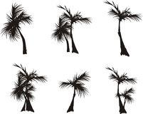 Schattenbilder der Palmen Lizenzfreie Stockbilder