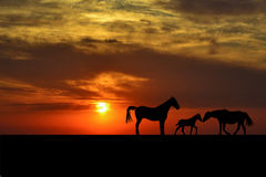 Schattenbilder der Pferdefamilie bei Sonnenuntergang Stockfoto