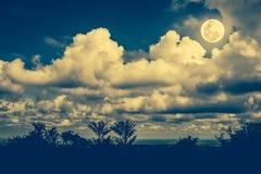 Schattenbilder des Baums gegen nächtlichen Himmel und hellen Mond outdoor Lizenzfreies Stockbild