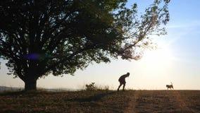 Schattenbilder des hübschen Mädchens gehend in die Wiese mit ihrem netten Hund stock video footage