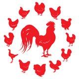 Schattenbilder des Hahns und der Hühner der unterschiedlichen Zucht lokalisiert auf einem weißen Hintergrund Lizenzfreie Stockfotografie