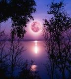 Schattenbilder des Holzes und des schönen Moonrise, heller Vollmond wo Lizenzfreies Stockfoto