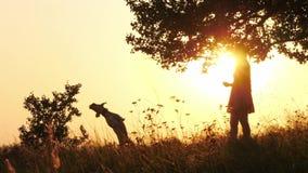 Schattenbilder des Mädchentrainings und -c$spielens mit ihrem netten Hund während des überraschenden Sonnenuntergangs