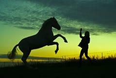 Schattenbilder des Pferds und der Frau auf einem Hintergrund des grünen Himmels am Abend Lizenzfreie Stockbilder