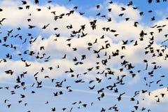 Schattenbilder einer Menge der Vögel auf einem schönen Himmel Lizenzfreies Stockbild