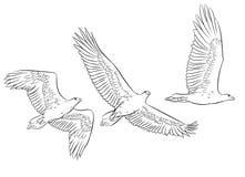 Schattenbilder im Entwurf von schwebenden Adlern in den verschiedenen Haltungen, Kunstlinie, Lizenzfreies Stockbild