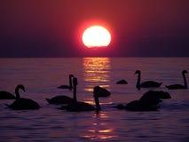 Schattenbilder am Sonnenuntergang Lizenzfreies Stockfoto