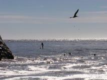 Schattenbilder am Strand lizenzfreies stockfoto
