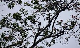 Schattenbilder und Schatten eines einzelnen Vogels, der Niederlassungen und der Blätter eines Baums stockfotos