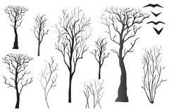 Schattenbilder von bloßen Bäumen Stockfotos