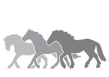 Schattenbilder von drei Pferden auf dem Lauf Lizenzfreies Stockbild