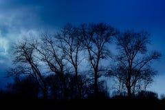 Schattenbilder von Heimat USA-Bäumen gegen einen bewölkten Himmel in der blauen Stunde stockfotografie