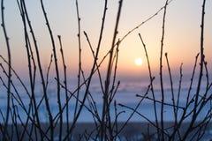 Schattenbilder von Niederlassungen auf dem Sonnenuntergang Stockfotografie