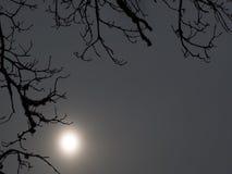 Schattenbilder von Niederlassungen und von Sonnenschein Stockfotografie