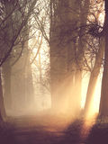 Schattenbilder von Paaren im Nebel Lizenzfreie Stockbilder