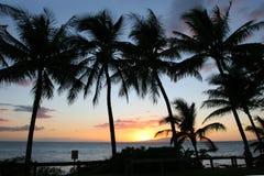 Schattenbilder von Palmen bei Sonnenuntergang stockfotografie
