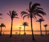 Schattenbilder von Palmen gegen bunten Himmel bei Sonnenuntergang Lizenzfreies Stockfoto