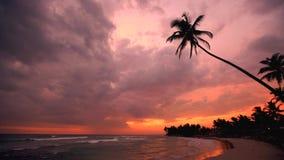 Schattenbilder von Palmen gegen Sonnenunterganghimmel in Ozean setzen in Sri Lanka 2016 auf den Strand stock video