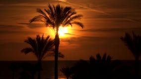 Schattenbilder von Palmen vor dem hintergrund der Sonne an der Dämmerung stock video