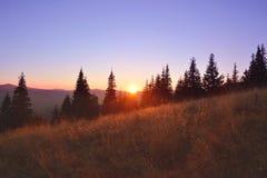 Schattenbilder von Tannenbäumen mit Berg im Hintergrund Lizenzfreie Stockfotos