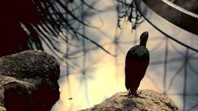 Schattenbilder von Vögeln auf dem Hintergrund des Sees Warme Morgenstrahlen der Sonne werden im Wasser reflektiert Der Vogel ist stock video