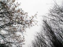 Schattenbilder von Winterbäumen gegen den Himmel Stockfoto