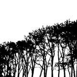 Schattenbildgestaltungselement der hohen Schwarzweiss-Bäume des Vektors Lizenzfreie Stockfotografie