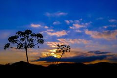 Schattenbildgrasblumen und -sonnenuntergang Lizenzfreie Stockfotos