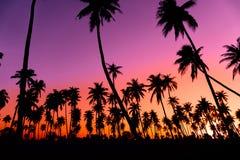 Schattenbildkokosnuss-Palmen mit Sonnenuntergang lizenzfreie stockfotografie
