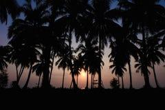 Schattenbildkokosnussbaum am Strand Stockbilder
