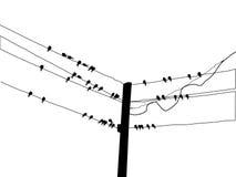Schattenbildmigrierenschwalbe Stockbild