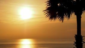 SchattenbildPalme mit schönem weichem orange Himmel reflektieren das Meer Sonnenuntergang im Hintergrund Abstrakter orange Himmel Stockbild