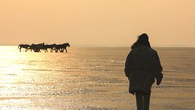 Schattenbildpferde auf dem Strand während des Sonnenuntergangs lizenzfreie stockfotos