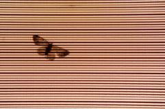 Schattenbildschmetterlingsschatten auf transparentem blindem Vorhang Stockfotos