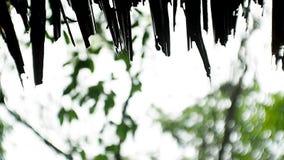 Schattenbildstrohdach mit dem Wassertropfenregnen stock footage