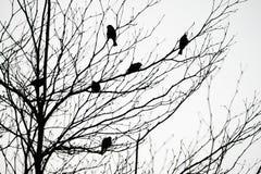 Schattenbildvögel auf Baum und Niederlassungen stockfoto