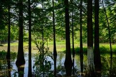 Schattiertes Sumpfgebiet im sonnigen Sommer stockbilder