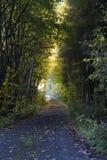 Schattige Straße im Herbstwald Stockfoto