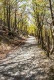 Schattiger Buchenbaumweg in den Pyrenäen-Bergen Lizenzfreies Stockbild