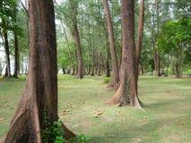 Schattiger Park Voll von den üppigen grünen Kiefern und von gefallenen Blättern An lizenzfreie stockfotografie